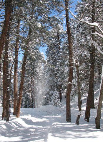 Snow day5